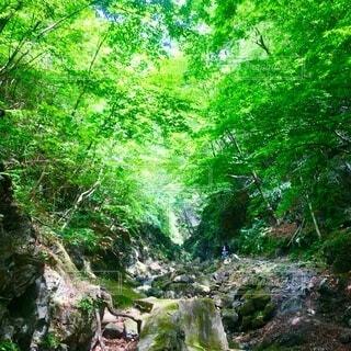 川苔山 新緑 登山の写真・画像素材[3862969]