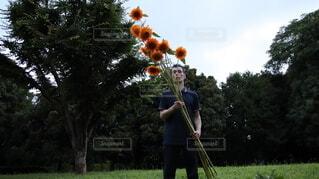 森の中でひまわりを数える男の写真・画像素材[4662666]