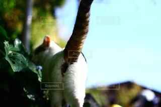 猫散歩の写真・画像素材[3840850]