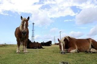 寒立馬の写真・画像素材[3869108]