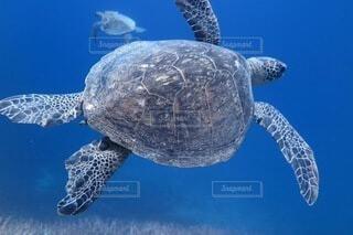 ウミガメの写真・画像素材[3869109]