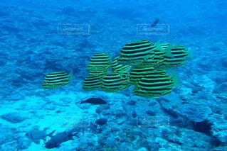 魚の写真・画像素材[3869131]
