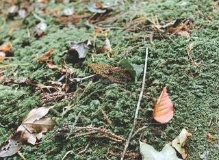 落ち葉の写真・画像素材[3844006]