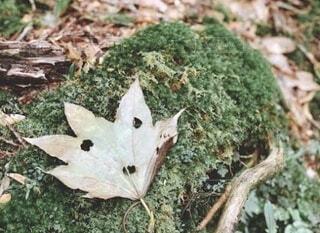 落ち葉で感じる秋の写真・画像素材[3844001]
