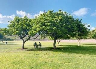 ハワイの大きな木の下の2人の写真・画像素材[3844227]