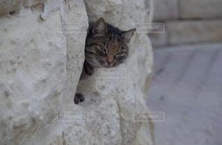 覗き見する猫の写真・画像素材[3849273]