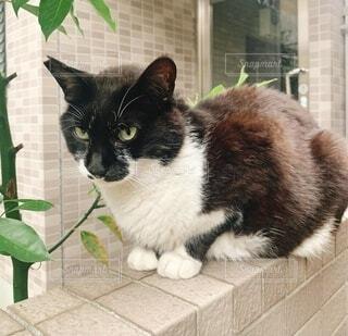 構える猫の写真・画像素材[3849270]