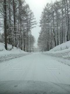 日本の雪道の写真・画像素材[3846294]