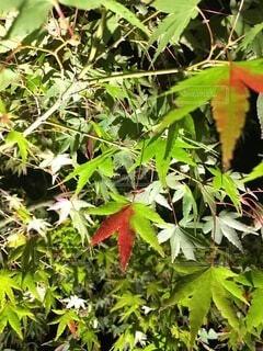緑の植物のクローズアップの写真・画像素材[3847940]