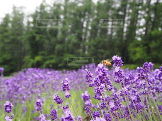 植物の上の紫色の花の写真・画像素材[3973417]