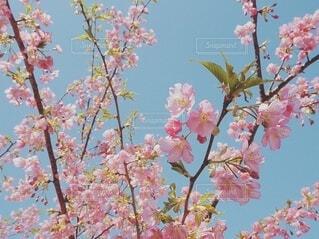 木に花の花瓶の写真・画像素材[3973416]