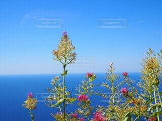 木に花の花瓶の写真・画像素材[4060263]