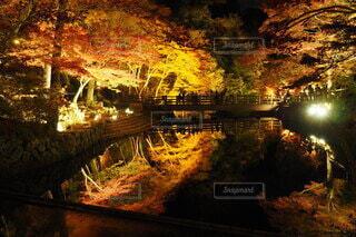 森の眺めの写真・画像素材[3849006]