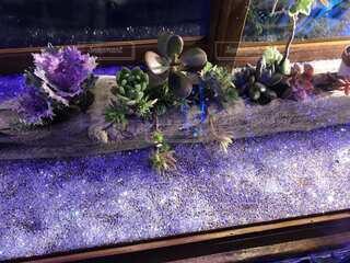 紫色の花のグループの写真・画像素材[3855179]