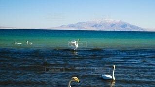 水の体の上を飛んでいる鳥の写真・画像素材[3855903]