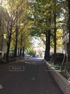 通りの真ん中に木の写真・画像素材[3862398]