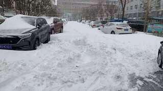 雪に覆われた車の写真・画像素材[3920954]