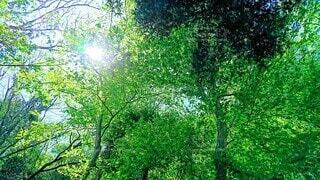 森林浴の写真・画像素材[3855755]