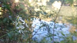 湖の脇の小さな花の写真・画像素材[3857160]