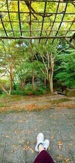 一休み中の森の景色の写真・画像素材[3863905]