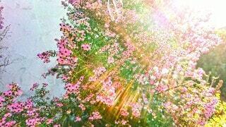 花を見上げるの写真・画像素材[3907177]