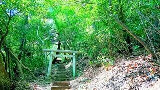 森の中の鳥居の写真・画像素材[3907181]
