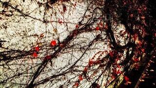 エモい蔦の写真・画像素材[3912224]