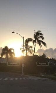 風景,海外,太陽,朝日,樹木,正月,朝,ヤシの木,お正月,ハワイ,日の出,新年,初日の出