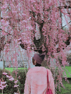 ピンク サクラ 綺麗 可愛い お城