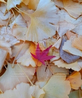 小さい秋見つけたの写真・画像素材[3855558]