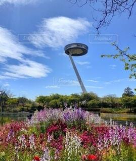 花のある風景の写真・画像素材[3855616]