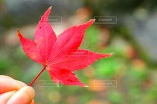 紅葉を撮るの写真・画像素材[3860643]