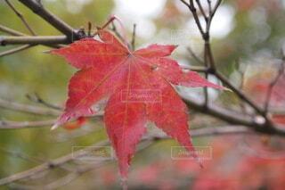 そっと秋を楽しむの写真・画像素材[3863769]