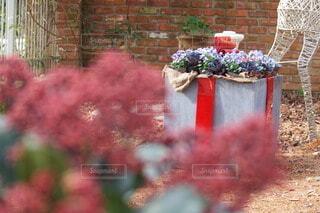 ガーデンにもクリスマスの写真・画像素材[3989446]