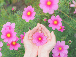 植物の上のピンクの花の写真・画像素材[3856122]