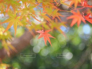 秋の訪れの写真・画像素材[3859274]