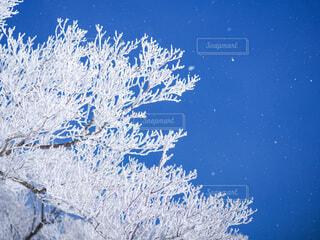 冬の木の写真・画像素材[3859359]