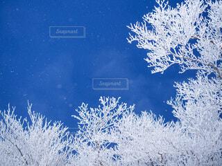 雪の中の木の写真・画像素材[3859360]