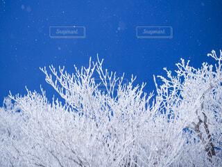 半分青いの写真・画像素材[3859362]