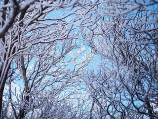 樹氷の写真・画像素材[3859361]