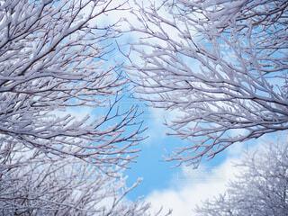 雪の枝の写真・画像素材[3859363]