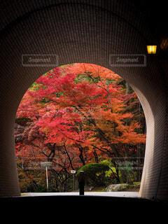 トンネルの向こうは…の写真・画像素材[3860586]