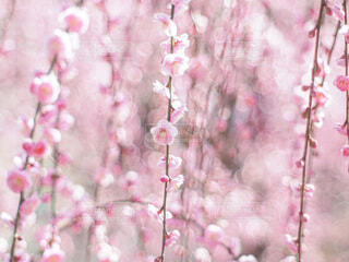 春色の写真・画像素材[4242855]