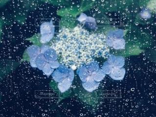 雨の中の写真・画像素材[4555054]