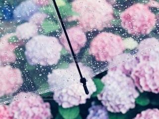 雨の向こうにの写真・画像素材[4555053]