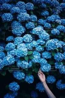 群青の写真・画像素材[4576455]