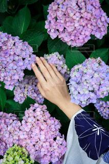 花のクローズアップの写真・画像素材[4581923]