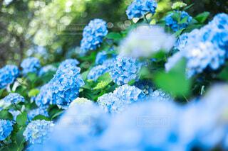 花のクローズアップの写真・画像素材[4588720]