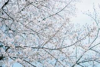 木のクローズアップの写真・画像素材[4746337]