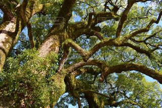 木,屋外,樹木,未来,力強く,生きる力
